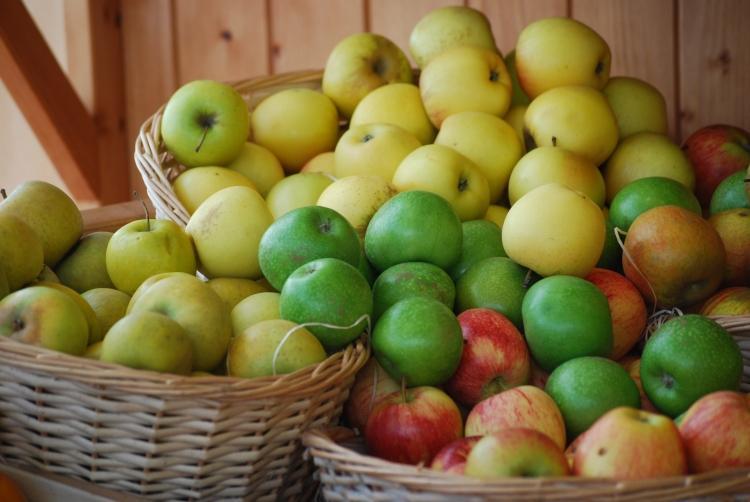 Le Mois des pommes - Verger de la Maison Blanche - Jumelles (49)