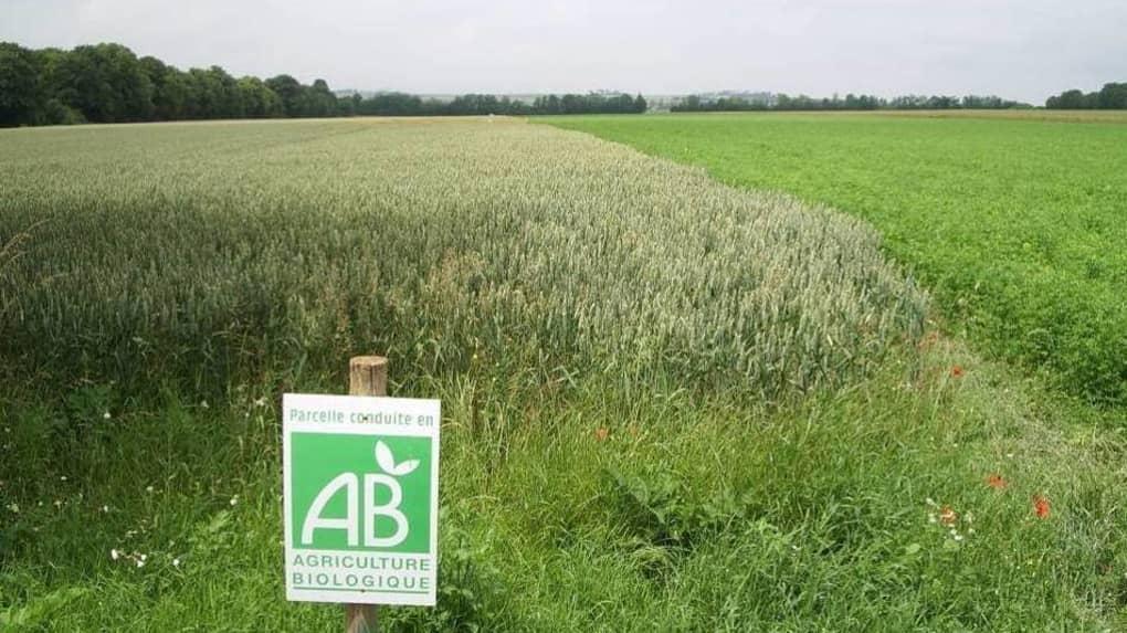 L'ACTU : PAYS-DE-LA-LOIRE : LA RÉGION VOTE 24 MILLIONS D'EUROS D'AIDE POUR L'AGRICULTURE BIOLOGIQUE