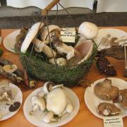 Festival des collectionneurs/Vide-grenier - Saint-Laurent-de-Lin (37)